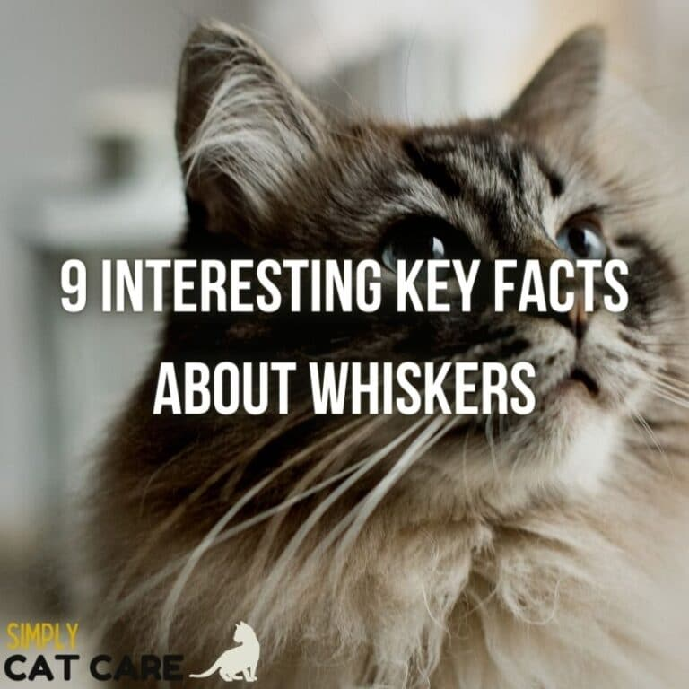 9 Interesting Facts about Cat Whiskers That Will Amaze You