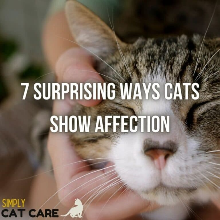 How Do Cats Show Affection? Learn The 7 Surprising Ways