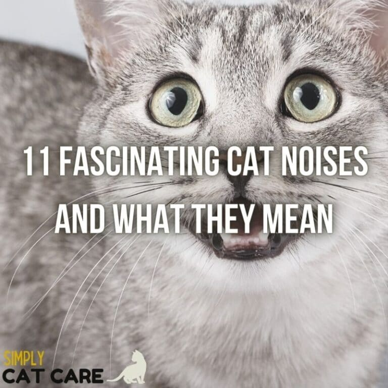11 Fascinating Cat Noises: What Is Your Cat Trying to Say?
