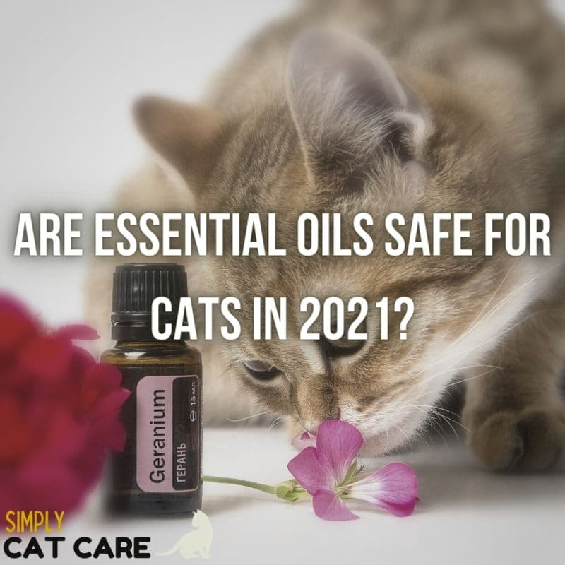 Are Essential Oils Safe For Cats in 2021?