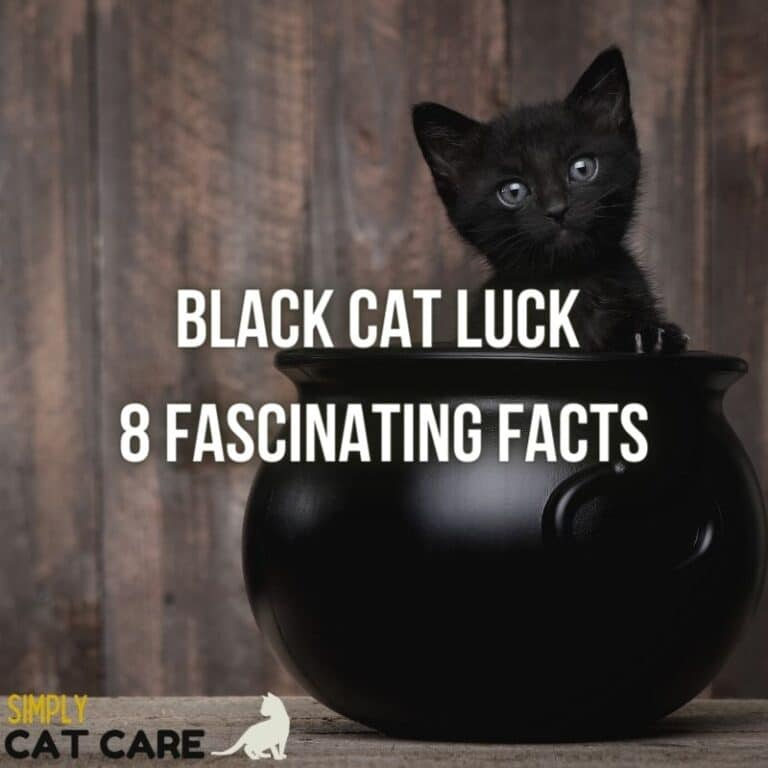 8 Fascinating Facts About Black Cat Luck You Won't Believe