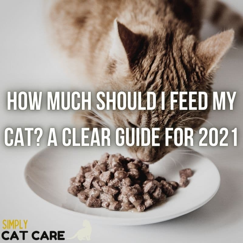 How Much Should I Feed My Cat? A Complete Guide for 2021