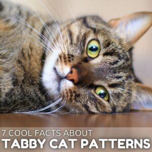 Tabby Cat Patterns