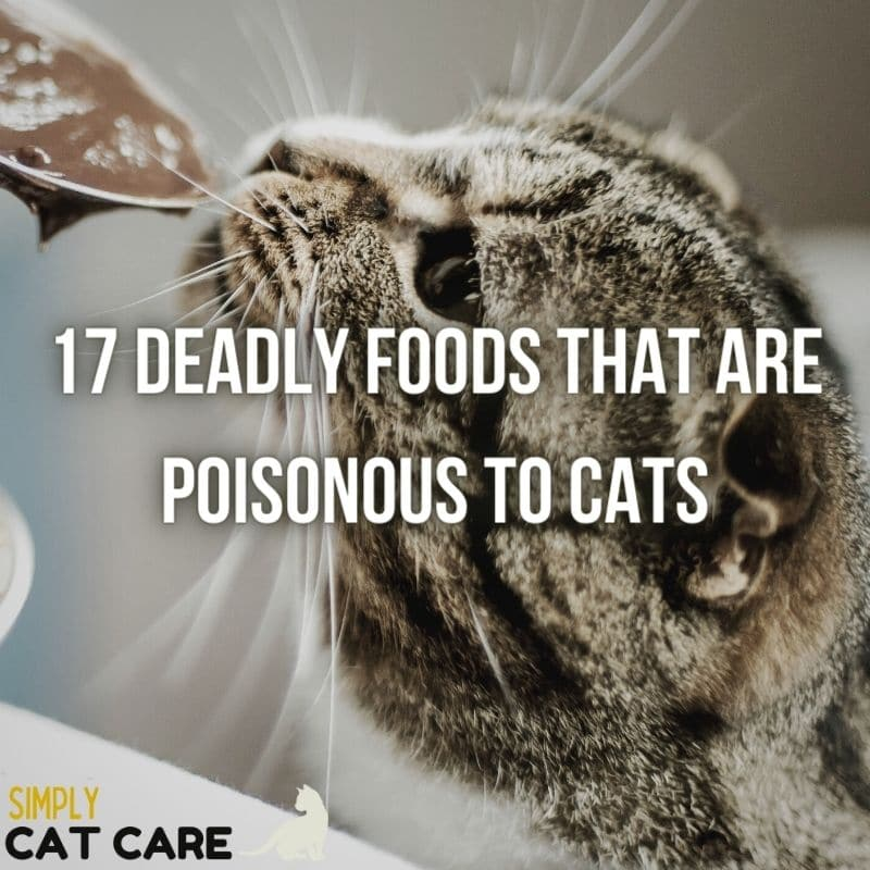17 Deadly Foods that are Poisonous to Cats