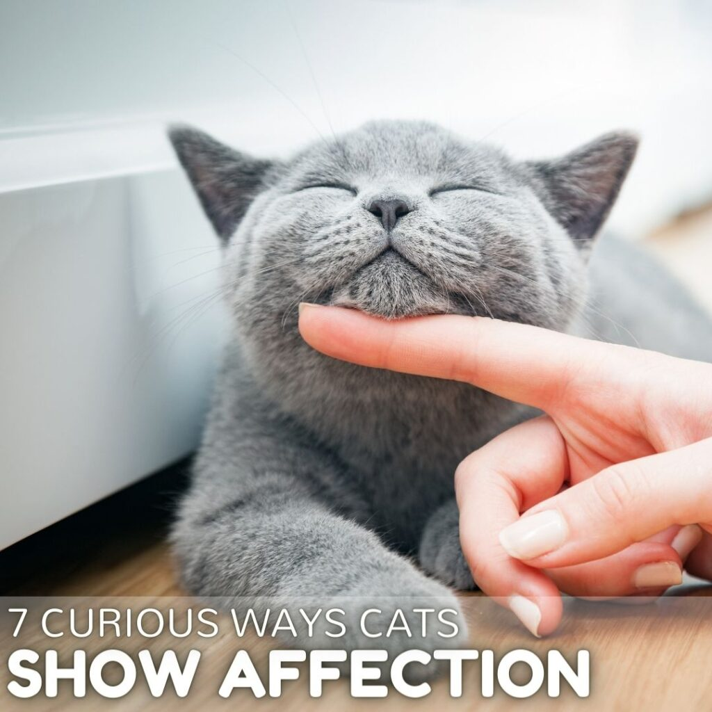 How do Cats Show Affection? 7 Epic Ways