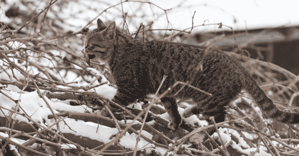 Feed your cat an animal-based diet based on their evolutionary needs
