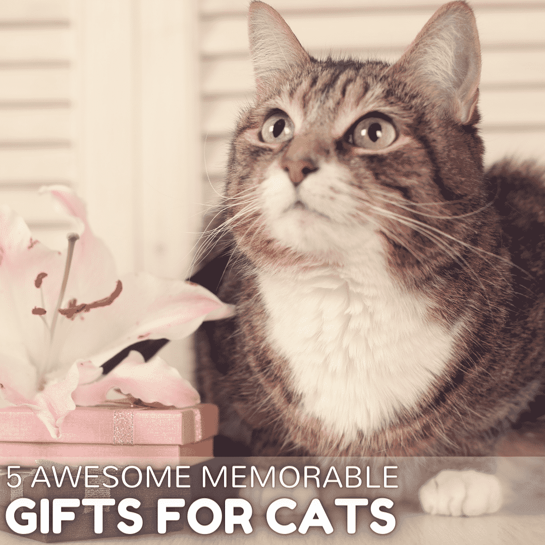 5 Awesome Memorable Gifts for Cats