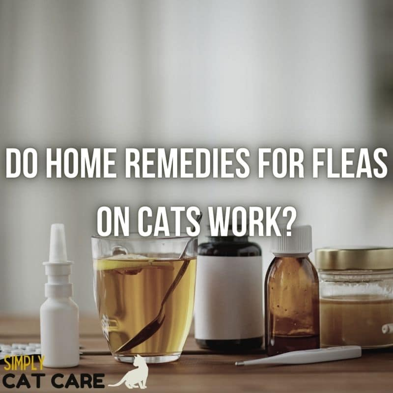 Do Home Remedies for Fleas on Cats Work?