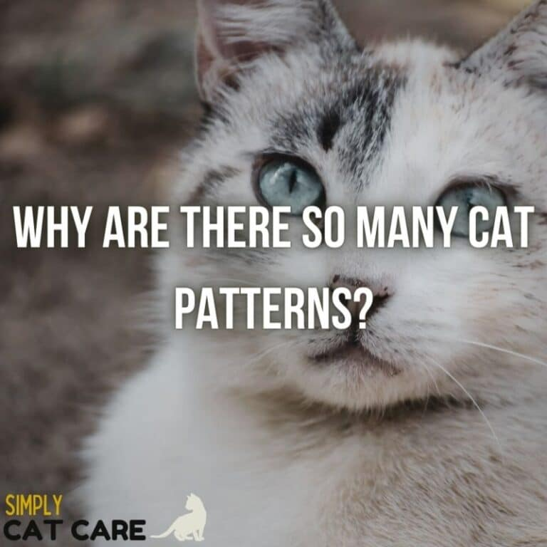 100 Cat Patterns: Why Your Cat Has Stripes