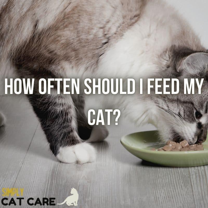 How Often Should I Feed My Cat?