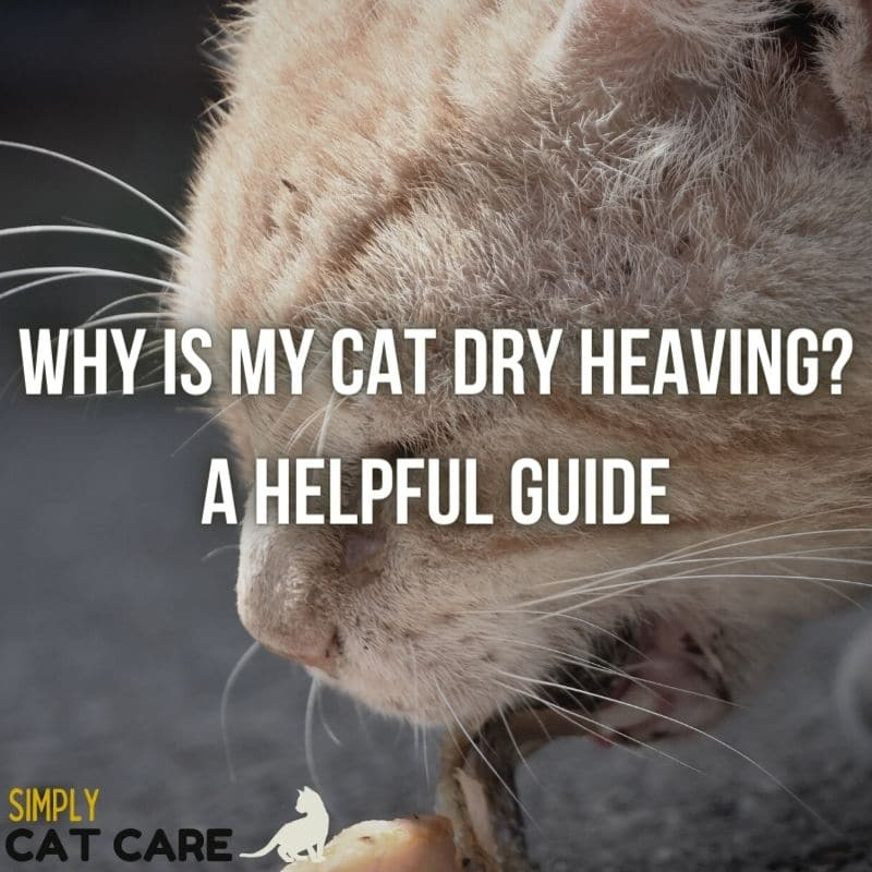 Why is my cat dry heaving? A Helpful Guide