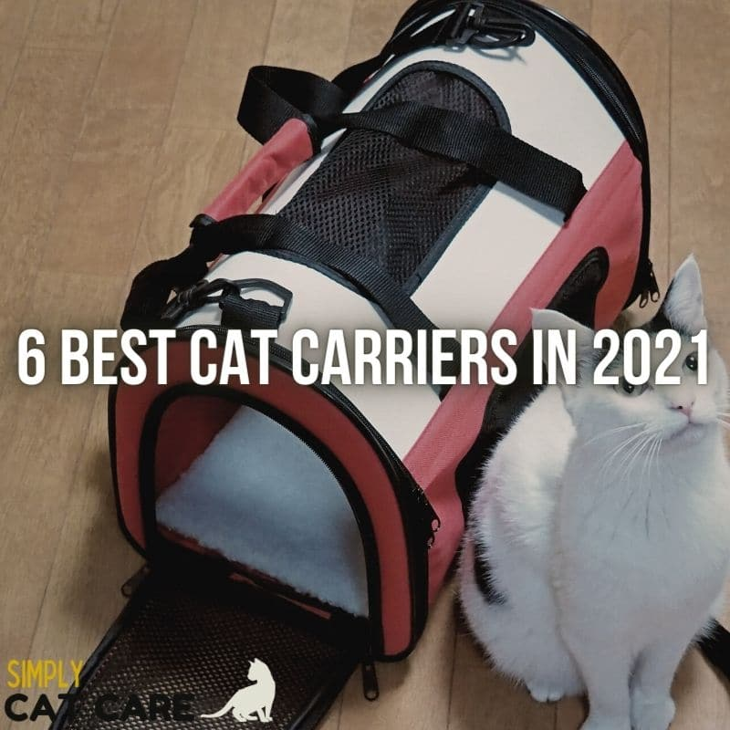 6 Best Cat Carriers For Comfort in 2021