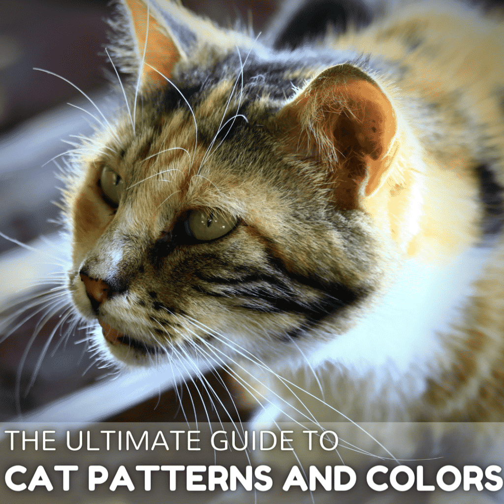 Why are there so Many Cat Patterns?