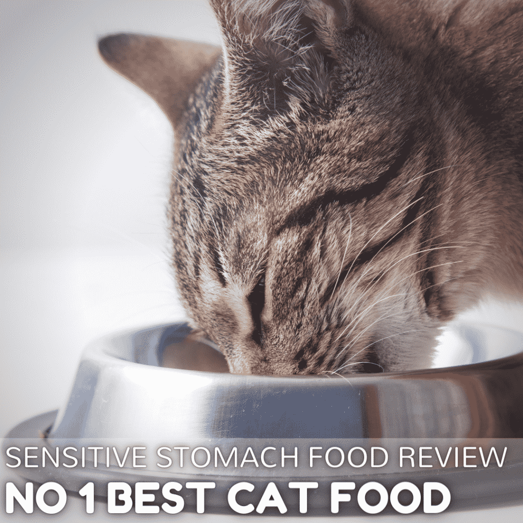 Best Cat Food for Sensitive Stomach in 2021