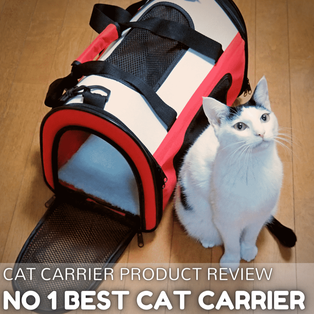 6 Best Cat Carriers in 2021