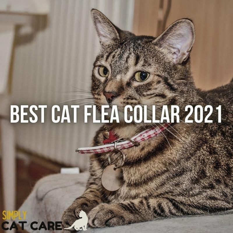 Best Cat Flea Collar in 2021