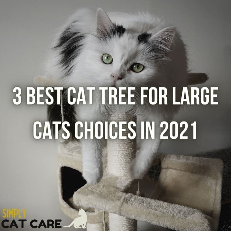 3 Best Cat Tree for Large Cats Choices in 2021