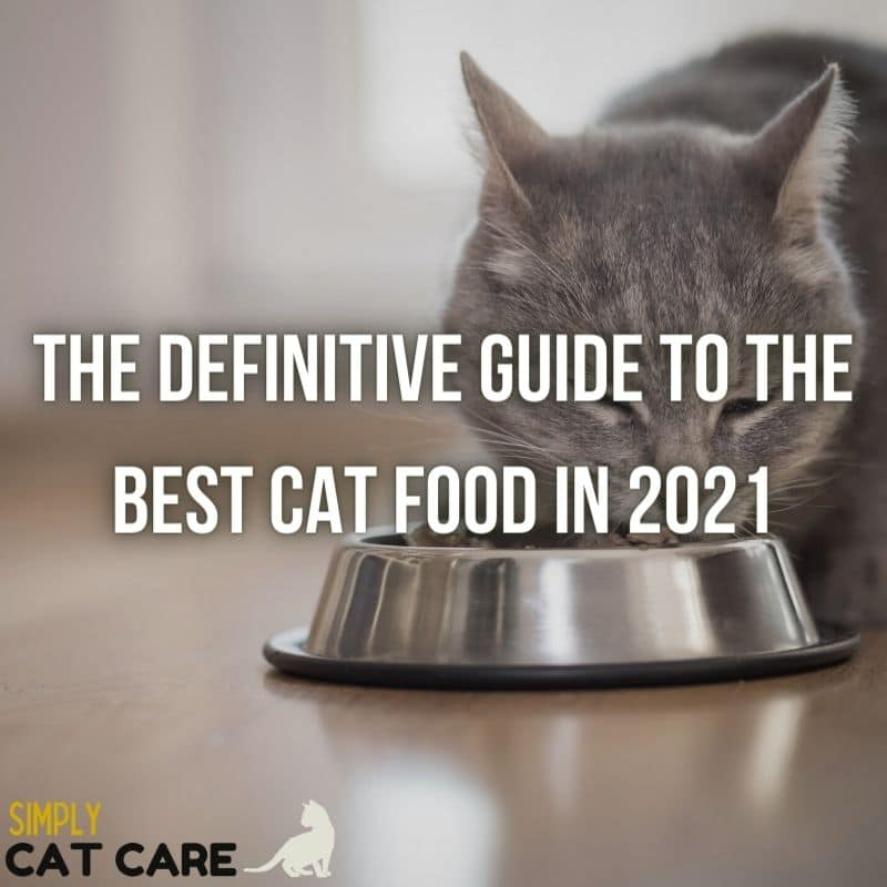 Guide to the Best Cat Food in 2021