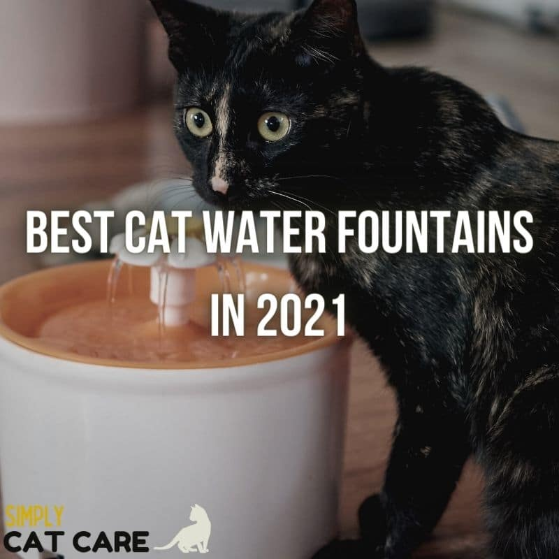 Best Cat Water Fountains in 2021