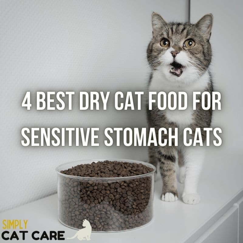 4 Best Dry Cat Food for Sensitive Stomach Cats