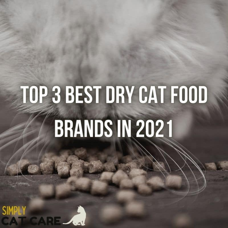 3 Best Dry Cat Food Brands For Top Health