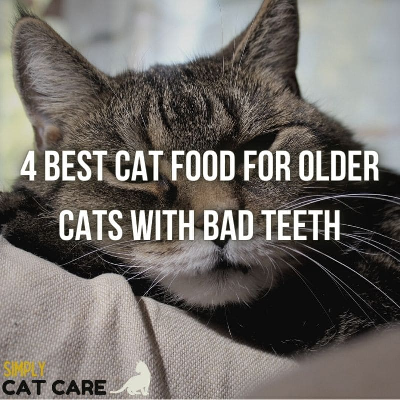 4 Best Cat Food for Older Cats with Bad Teeth
