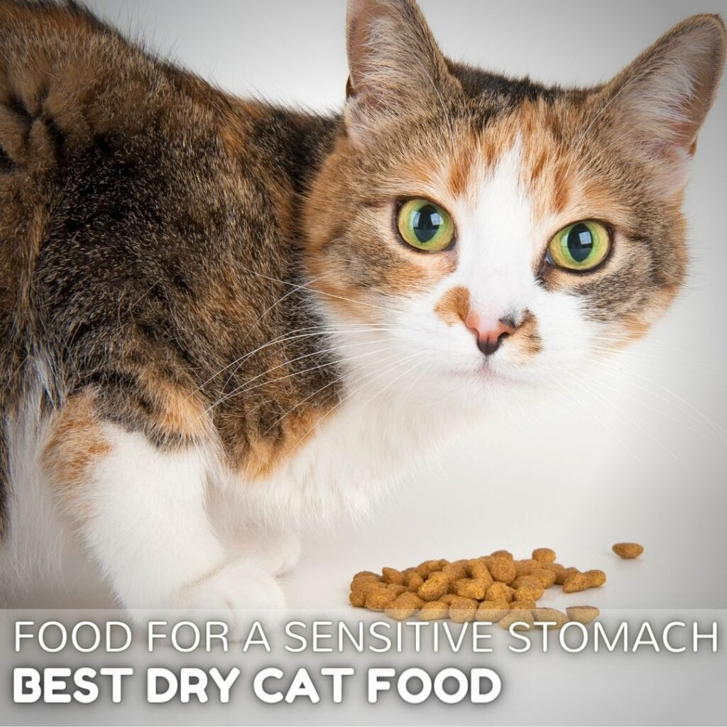 Best Dry Cat Food for Sensitive Stomach Cats in 2021