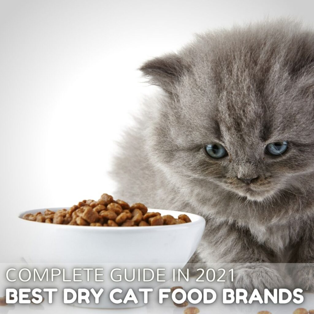 Best Dry Cat Food Brands in 2021