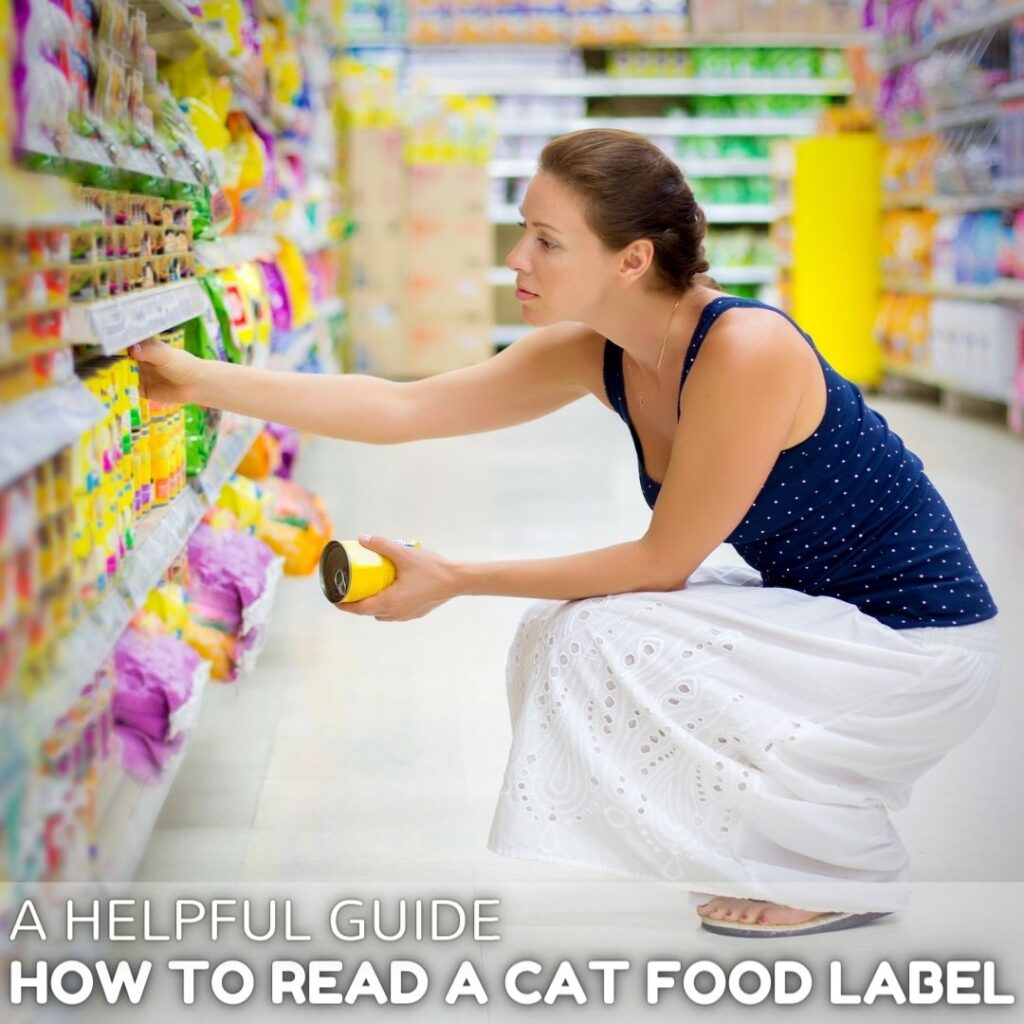 How to Read a Cat Food Label:  A Helpful Guide
