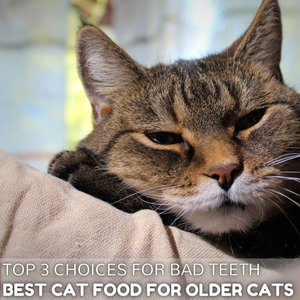 3 Best Cat Food for Older Cats with Bad Teeth