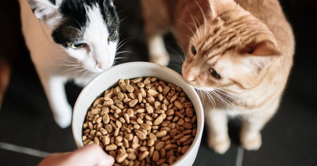 Best dry cat food for sensitive stomach cats