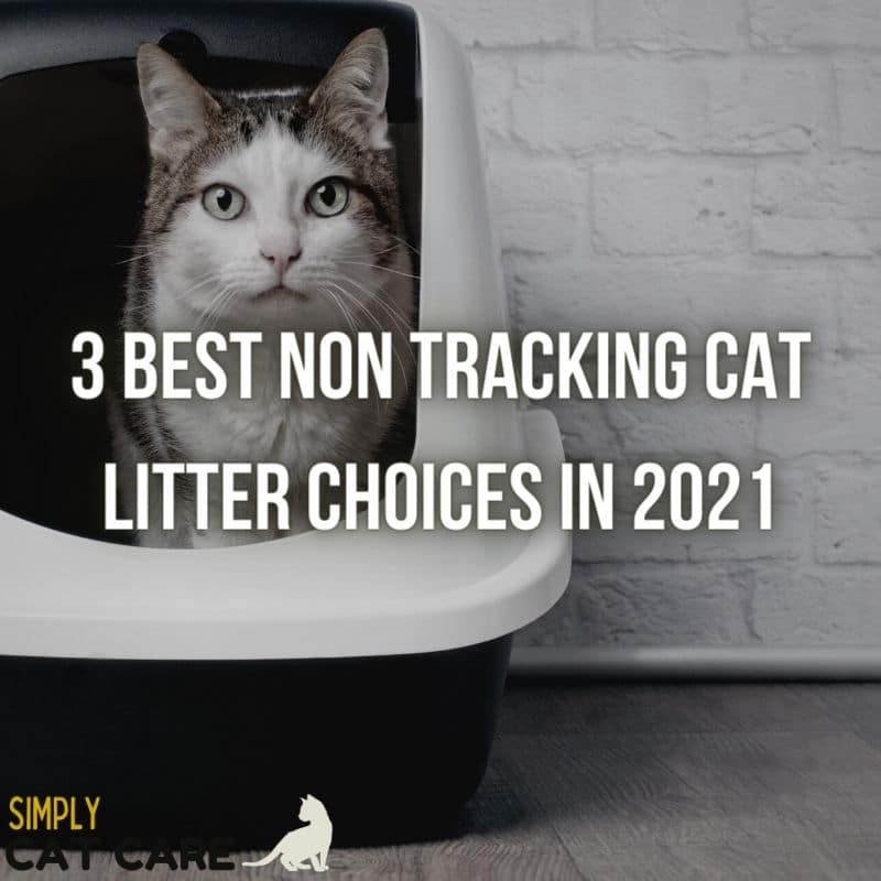 3 Best Non Tracking Cat Litter Choices in 2021