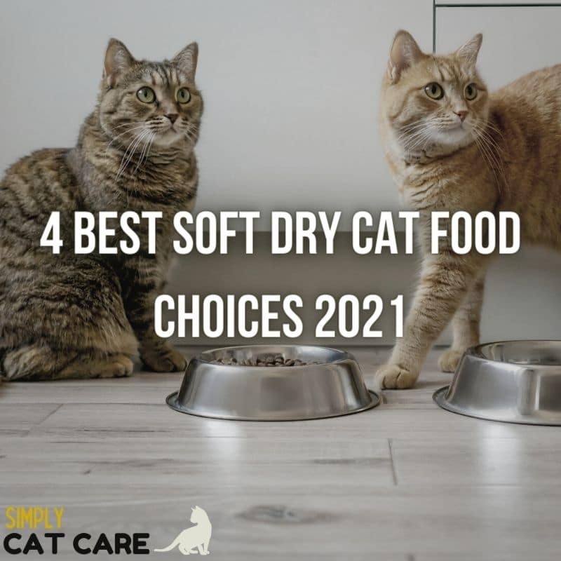 4 Best Soft Dry Cat Food Choices 2021