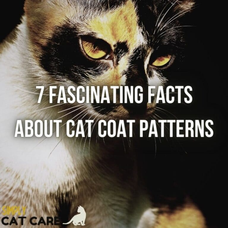 7 Fascinating Facts About Cat Coat Patterns