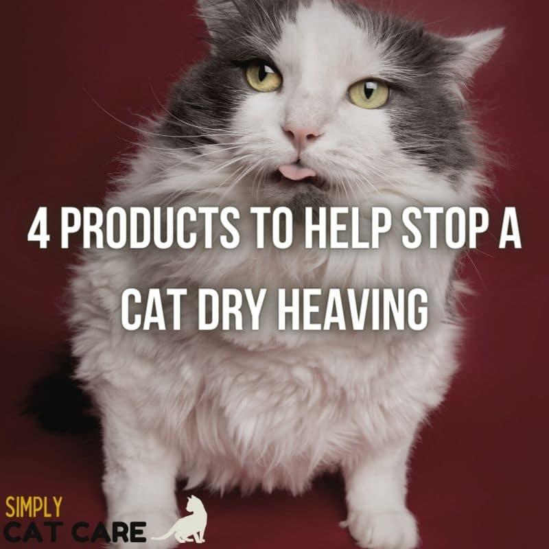 4 Ways to Help Stop a Cat Dry Heaving