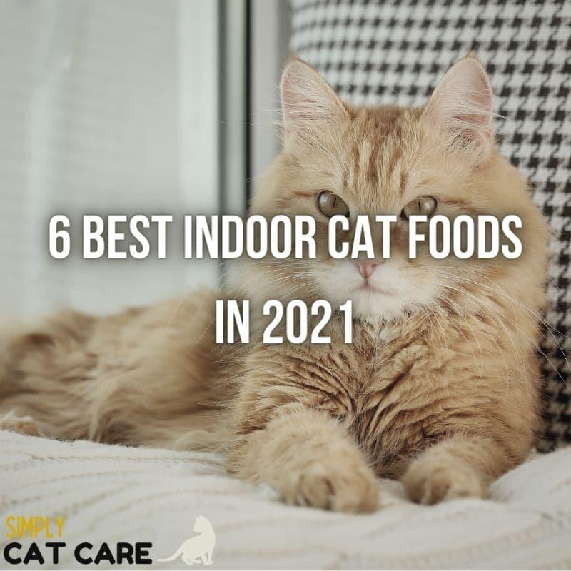 6 Best Indoor Cat Foods in 2021