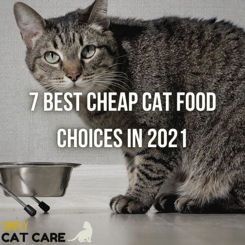7 Best Cheap Cat Food Choices in 2021