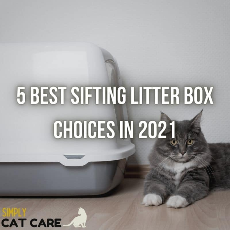5 Best Sifting Litter Box Choices in 2021