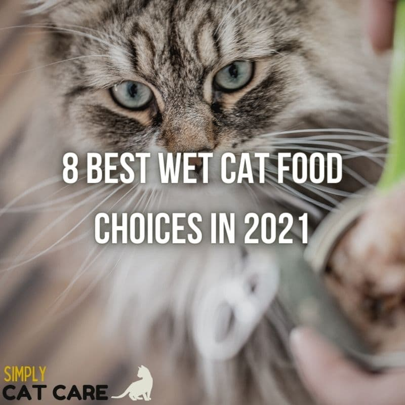 8 Best Wet Cat Food Choices in 2021