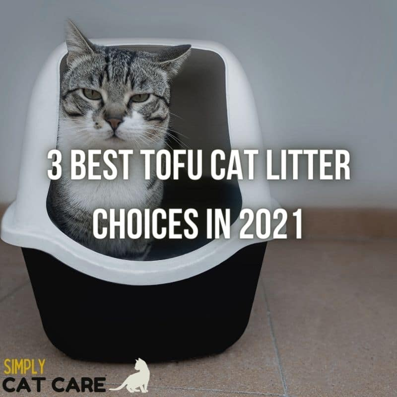 3 Best Tofu Cat Litter Choices in 2021
