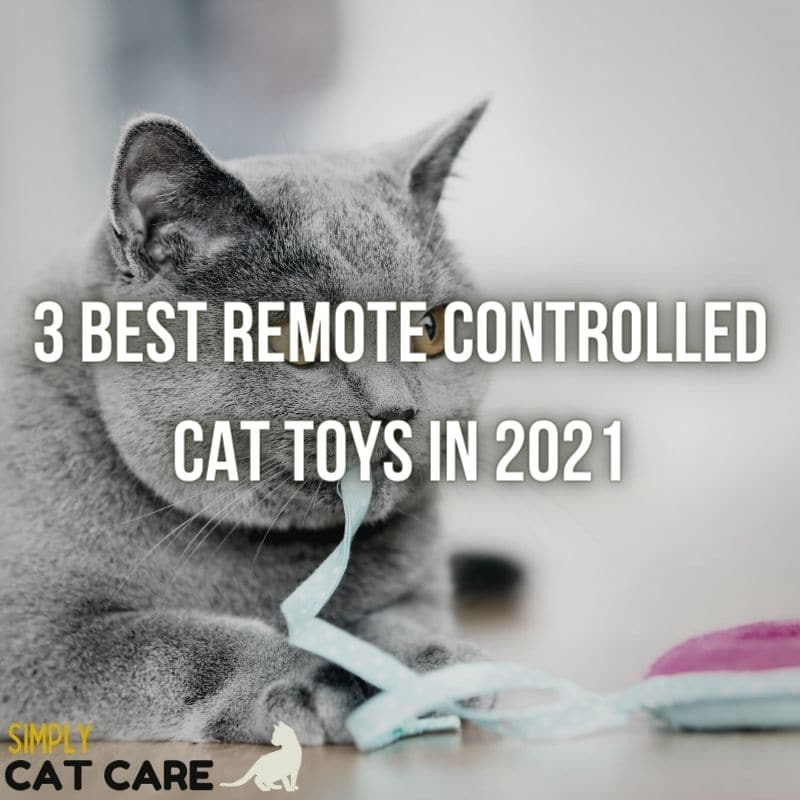 3 Best Remote Controlled Cat Toys in 2021