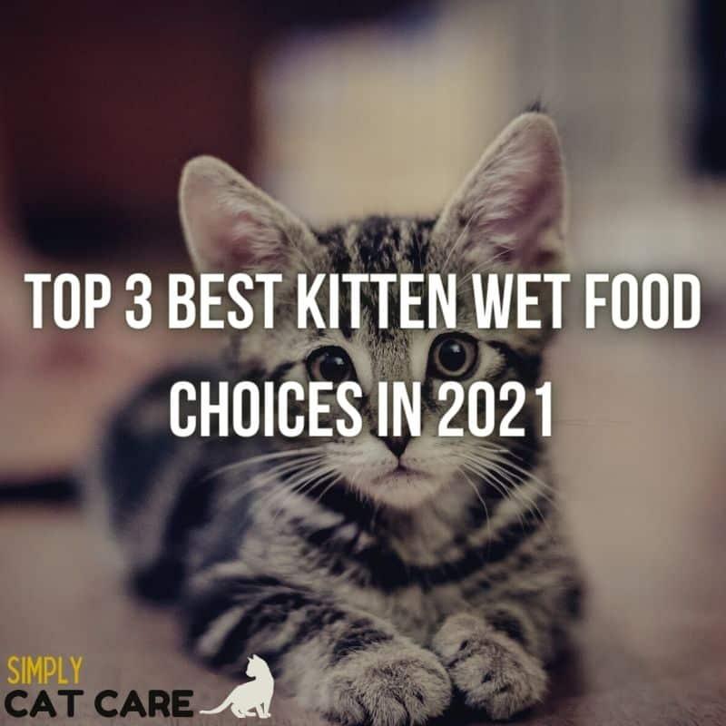 3 Best Kitten Wet Food For Health in 2021