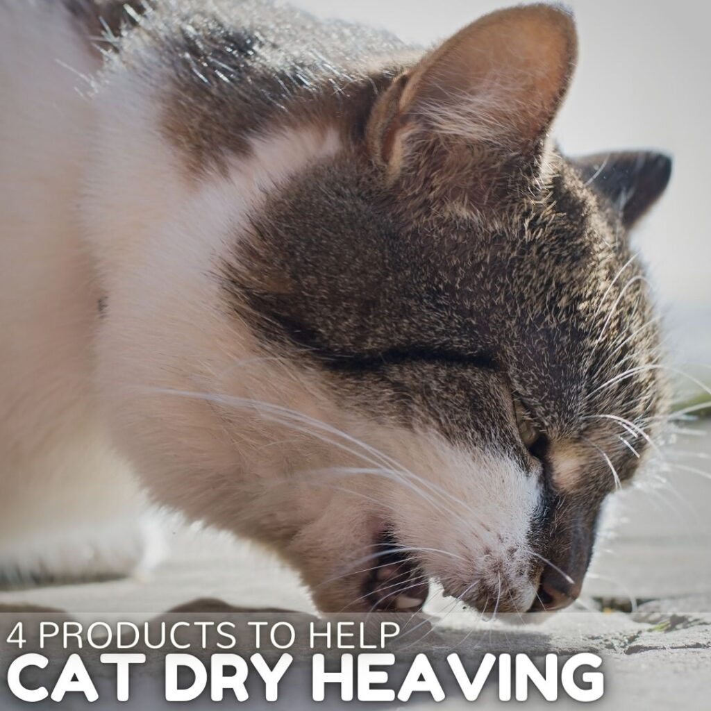 4 Products to Help Stop a Cat Dry Heaving
