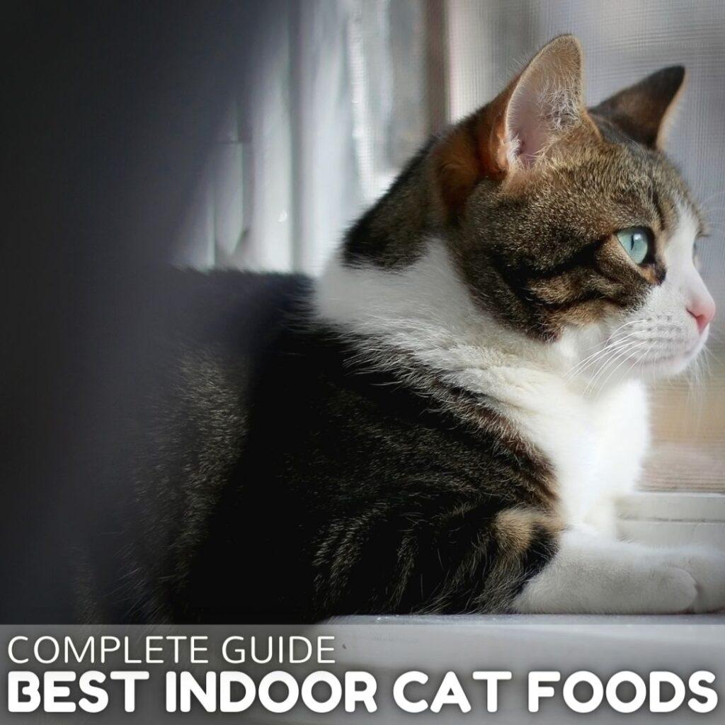4 Best Indoor Cat Foods in 2021