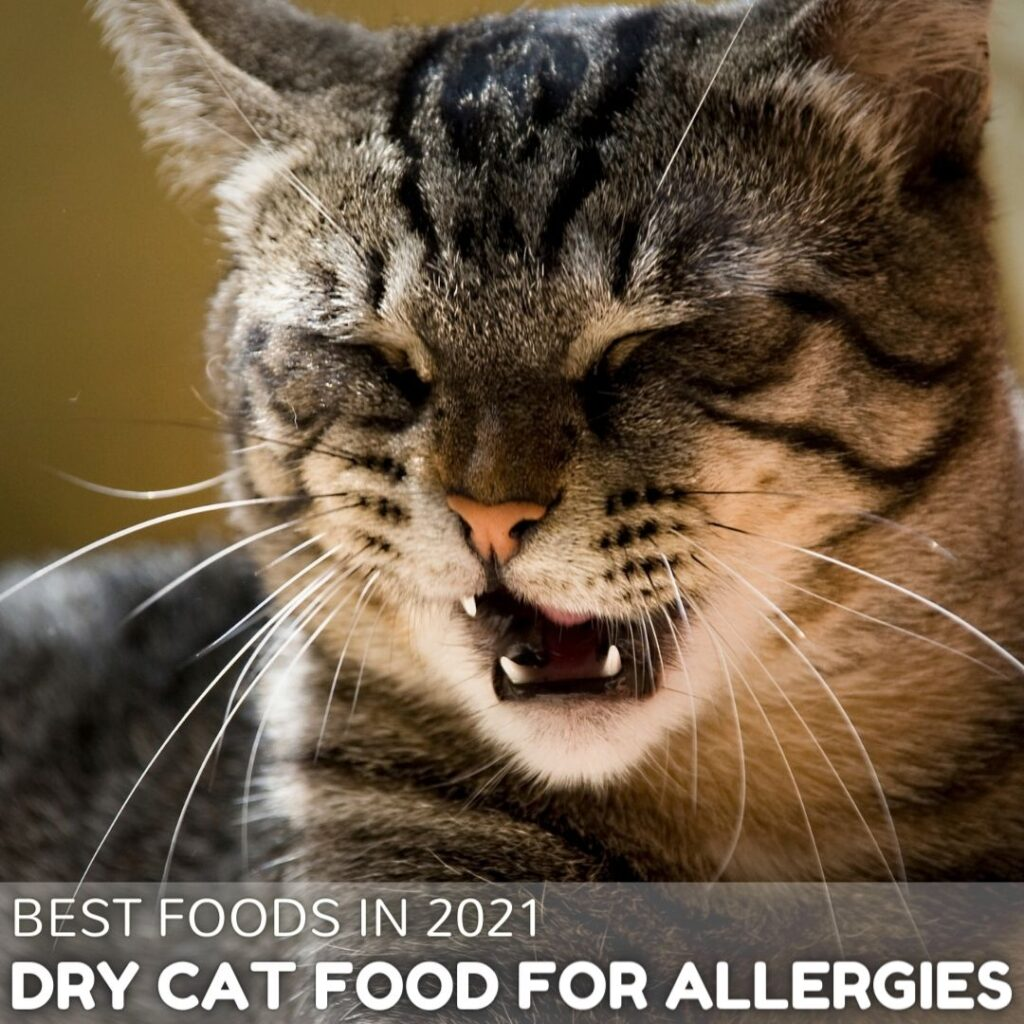 The Best Dry Cat Food for Allergies in 2021
