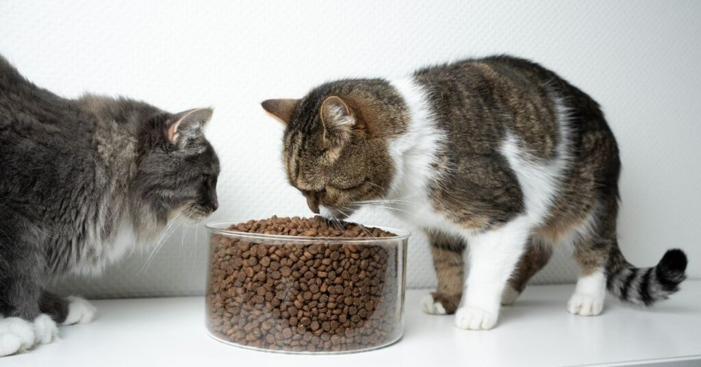 Best dry cat food for allergies