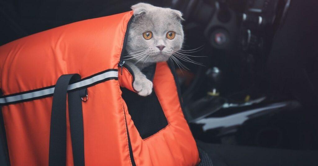 Best cat carrier for car travel