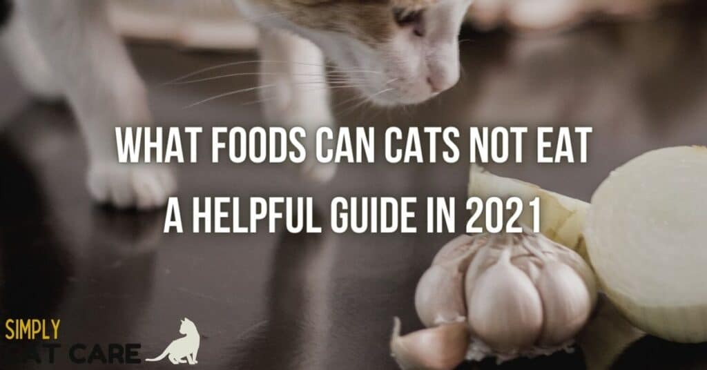 What foods can cats not eat