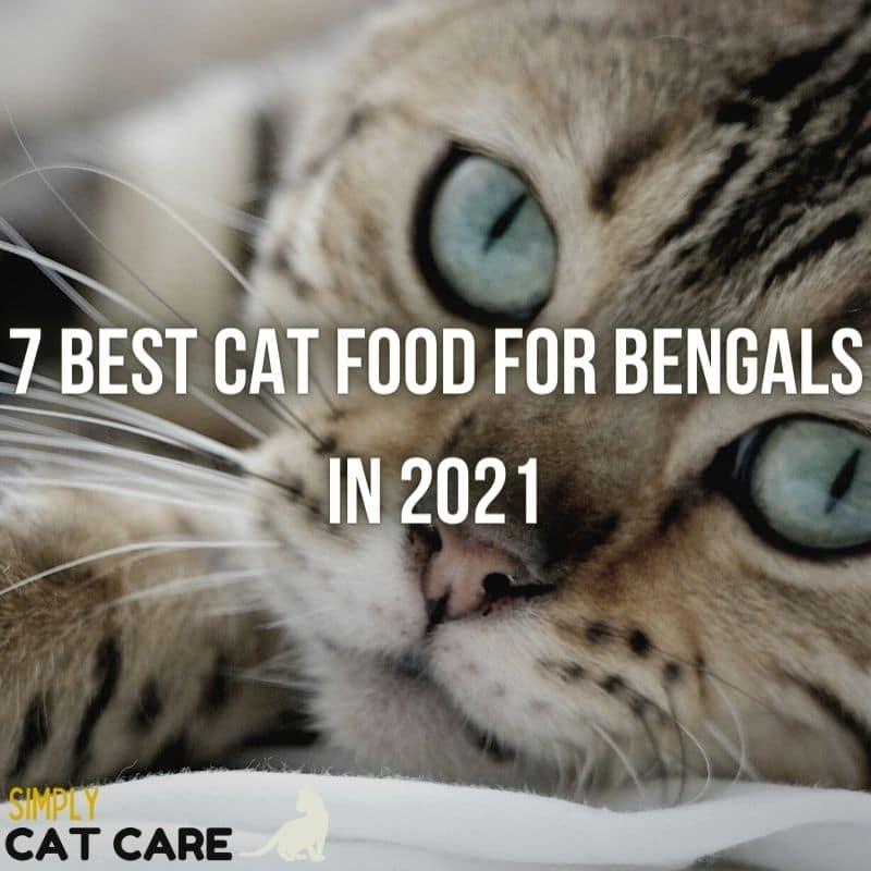 Top 7 Best Cat Food for Bengals Health