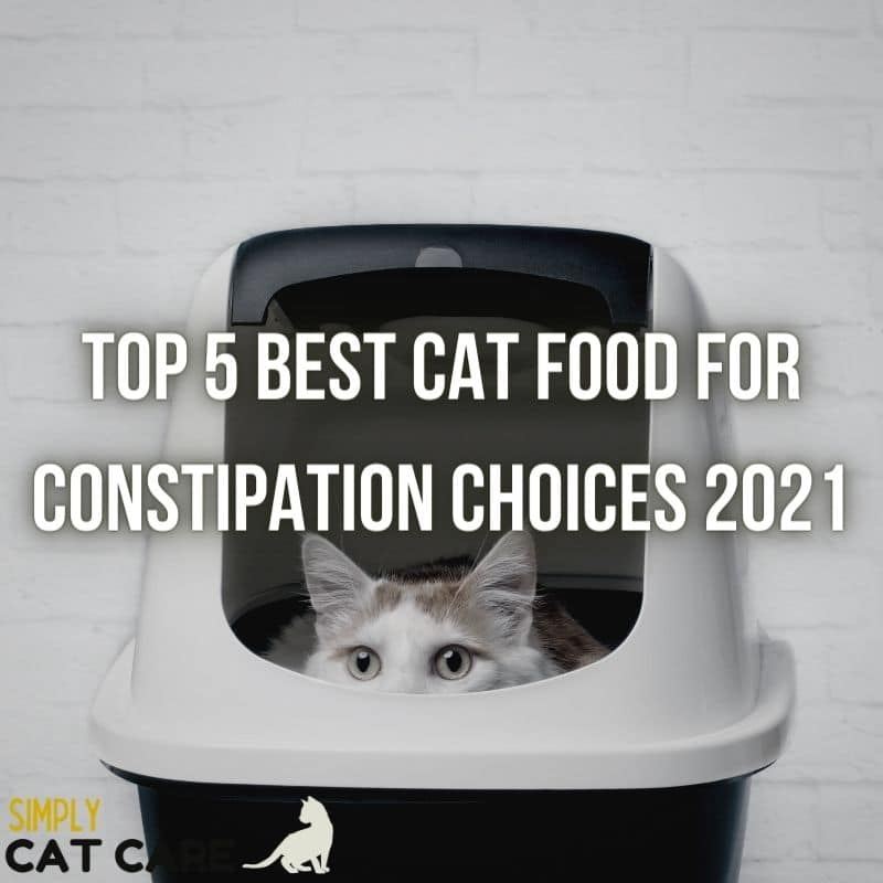 5 Best Cat Food for Constipation Choices